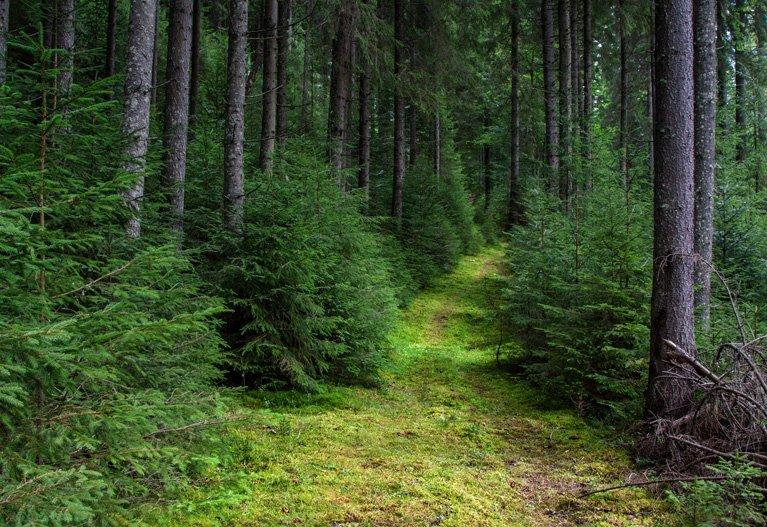 Реликтовые буковельные леса Карпат